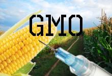 Geneticky modifikované plodiny a potraviny